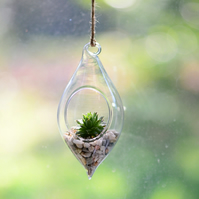 Water Drop Glass Hanging Glass Terrarium Kit with Succulent
