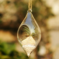 Air Plant Terrarium in a Water Drop Shaped Hanging Vase