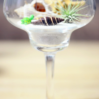 Wine Glass Terrarium Kit with Tillandsia Air Plant and shells  Mini Garden