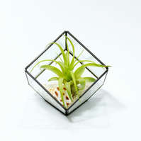 Air Plant Terrarium in a Geometric Stained Glass Vase Christmas Gift
