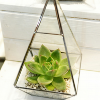 Succulent Terrarium in a Geometric 3D shape Stained Glass Container