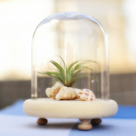 Air Plant Terrarium in a Glass Dome with Wooden Base