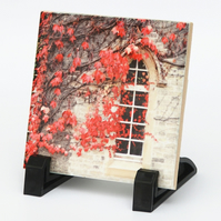 Red Ivy Photograph on Ceramic Tile
