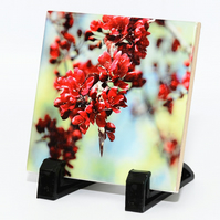 Spring Blossoms Photograph on Ceramic Tile Home Decoration