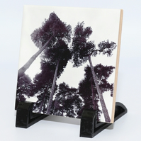 Scots Pine Photograph on Ceramic Tile Home Decoration