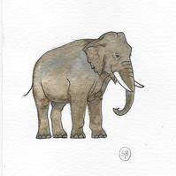Watercolour and Indian Ink Elephant Painting
