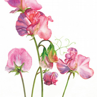 Pink sweet peas greetings card