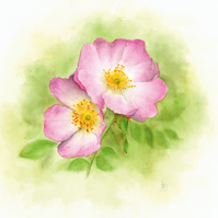 Rosa Canina greetings card
