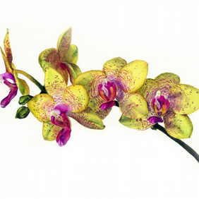 Orchid greetings card