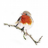 Robin red breast limited bird print