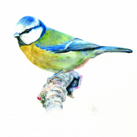 Blue tit limited edition giclee print