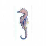 brooch - seahorse scrolled dark blue, pink, yellow on clear enamel
