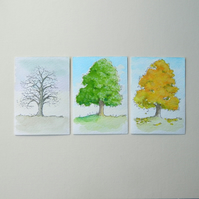 Pack of 3 ACEO's - Chestnut tree Seasons