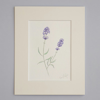 Original Watercolour Illustration 'Lavender'