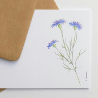 Cornflower Postcards (pack of 6)