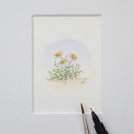 Miniature Watercolour Flower Painting Daisies  4 cm x 4.5 cm