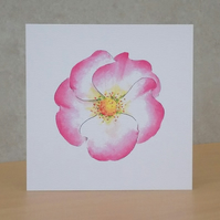 Blank Card ecofriendly 'Wildrose'
