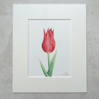 "Original 'Tulip' Watercolour (Mount size 12"" x 10"")"