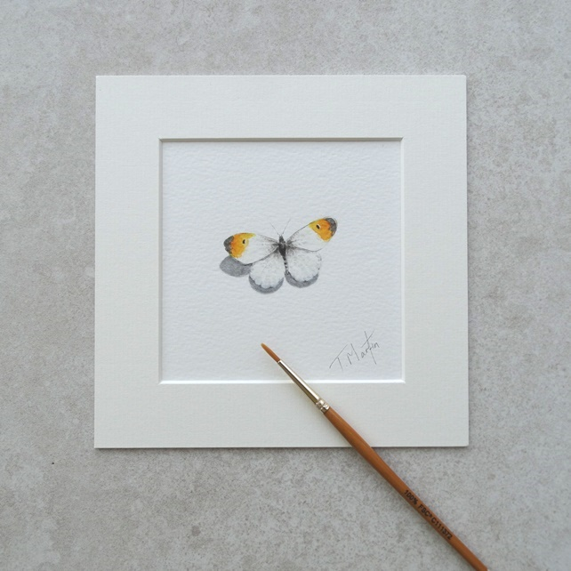 "Original 'Orange Tip Butterfly' Warercolour Illustration (Mount size 6"" x 6"")"
