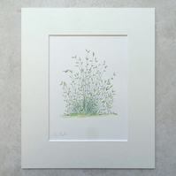 Original Watercolour Illustration 'Rushes'
