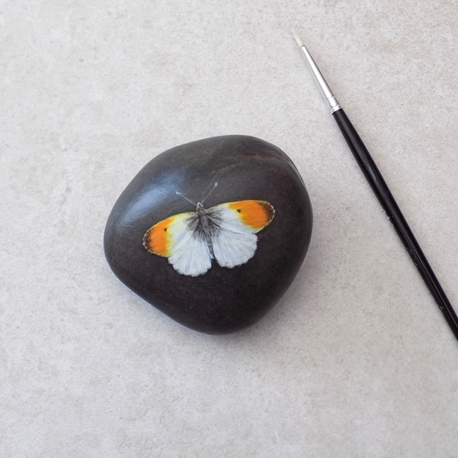 Painted Stone 'Orange Tipped Butterfly'