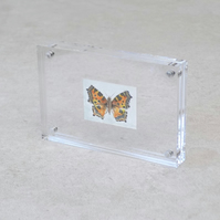 Miniature Watercolour Painting 'Small Tortoiseshell butterfly' (2.5 cm x 3.5 cm)