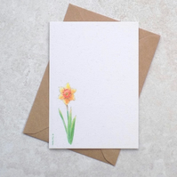 Ecofriendly Daffodil Postcards (pk of 6)
