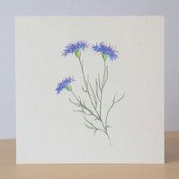 Wildflower Blank Card 'Cornflower'