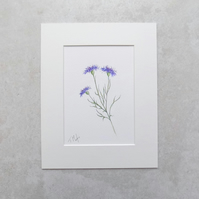 Original Wildflower Illustration 'Cornflower'