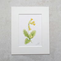 Original Wildflower Illustration 'Cowslip'