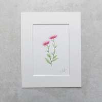 Original Wildflower Illustration 'Knapweed'