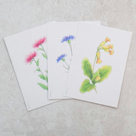 Wildflower Postcards (pack of 6)