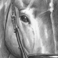 Horse -pencil A5 card artwork by Ally Tate