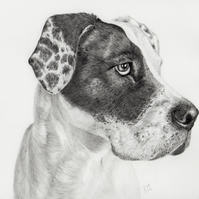 Pet Portrait in Graphite Pencil