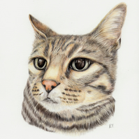 Custom Pet Portrait in Coloured Pencils