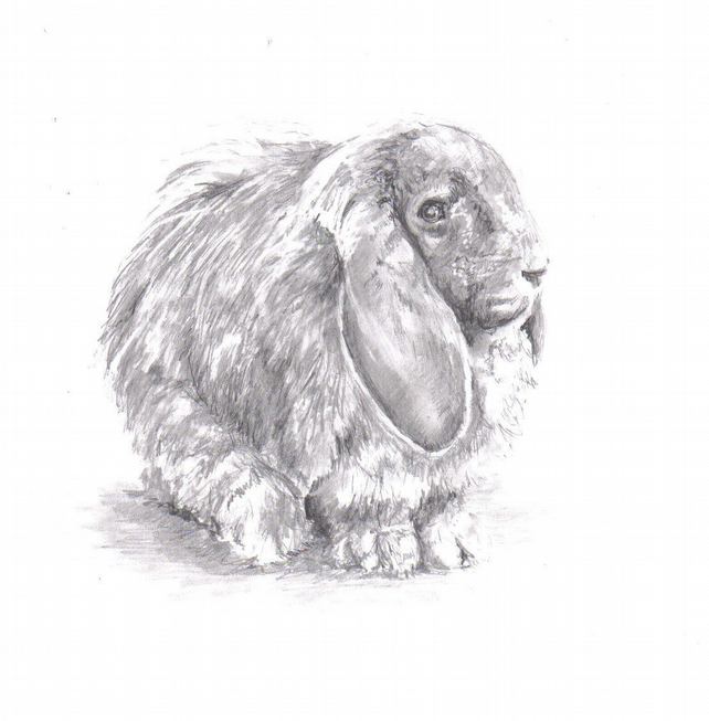 Pencil drawing: Rabbit (print)