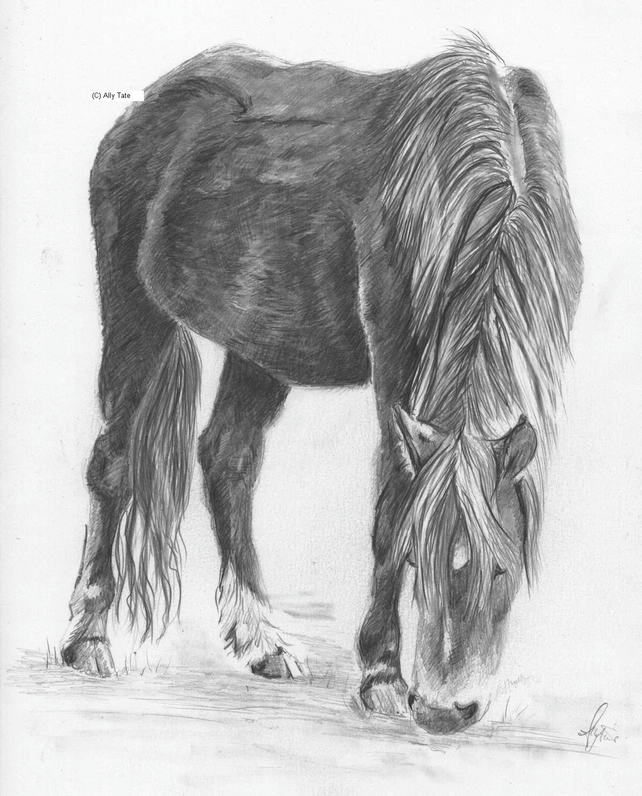 Pencil drawing Dartmoor pony