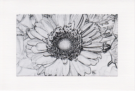 SALE - Black & White Gerbera Image - Greetings Card - Floral Photo Print