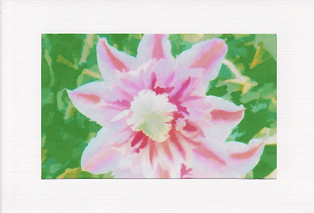 SALE - Clematis Image In Pink & White  - Greetings Card - Floral Photo Print