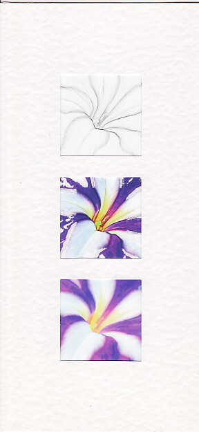 SALE - Petunia Flower Images -Greetings Card or Notelet -  Floral Photo Prints