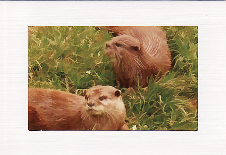 SALE - Otter Image - Greetings Card or Notelet - Animal Photo Print