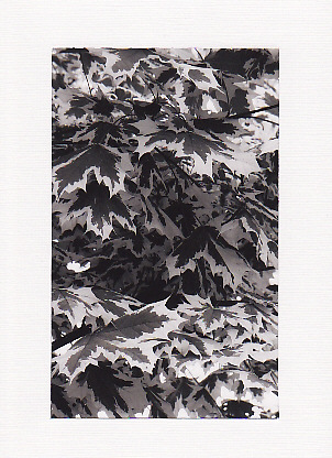 SALE - Black & White Leaves Image - Greetings Card or Notelet - Photo Print