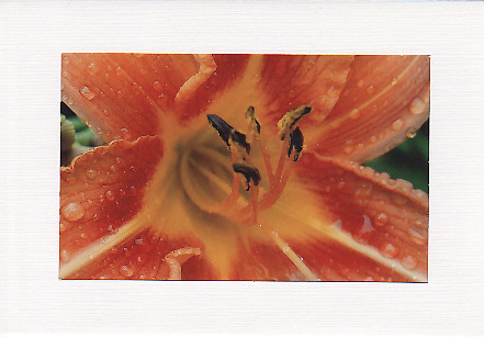 SALE - Orange Lily Image - Greetings Card or Notelet - Floral Photo Print