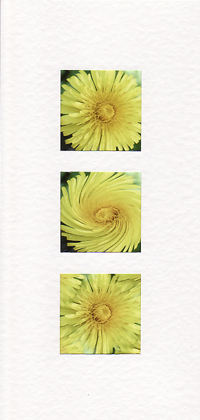SALE - Yellow Dandelion Flower Images -Greetings Card  -  Floral Photo Prints