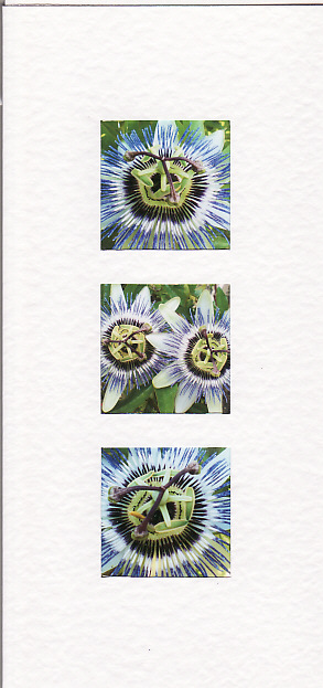 SALE - Passion Flower Images -Greetings Card or Notelet -  Floral Photo Prints