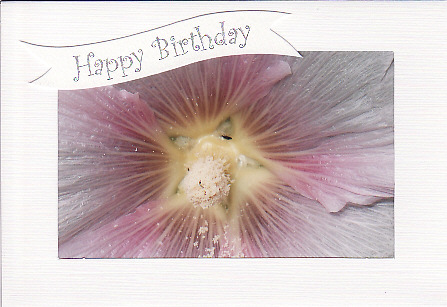 SALE - Light Pink Hollyhock Image - Happy Birthday Card - Floral Photo Print