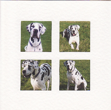 SALE - Great Dane Images  -  Greetings Card or Notelet -  Animal Photo Prints
