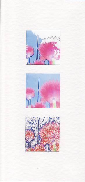 SALE - Chive Flower Images 3  - Greetings Card or Notelet -  Floral Photo Prints