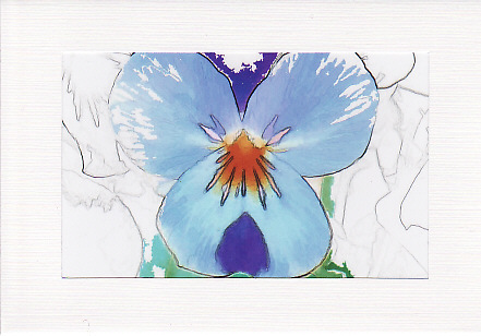 SALE - Viola  Image 1 - Greetings Card or Notelet - Floral Photo Print