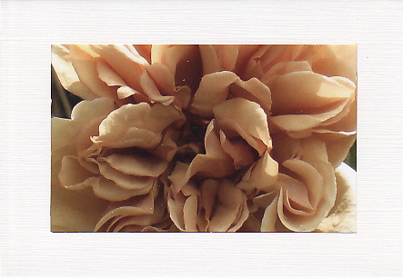 SALE - Coffee Rose Image - Greetings Card or Notelet - Floral Photo Print